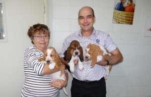 Basset Puppies 004edited