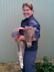 Dr Kate Forster with new born minature pony