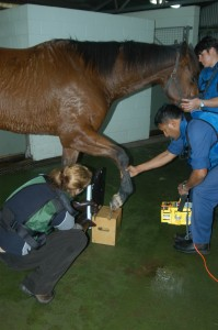 Xray equine foot