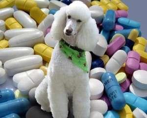 Pet meds