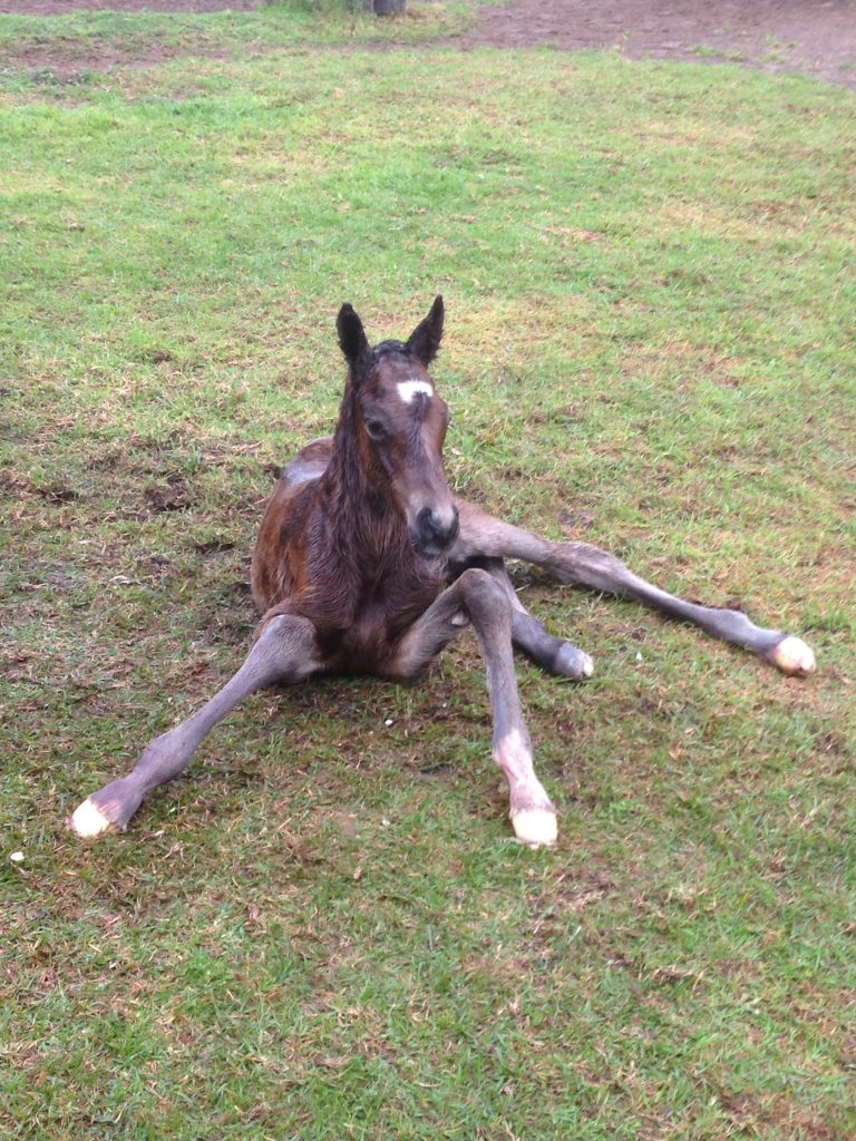 foal new born