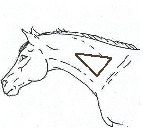 Injection site for horses neck