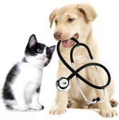 Dog and cat 1st aid